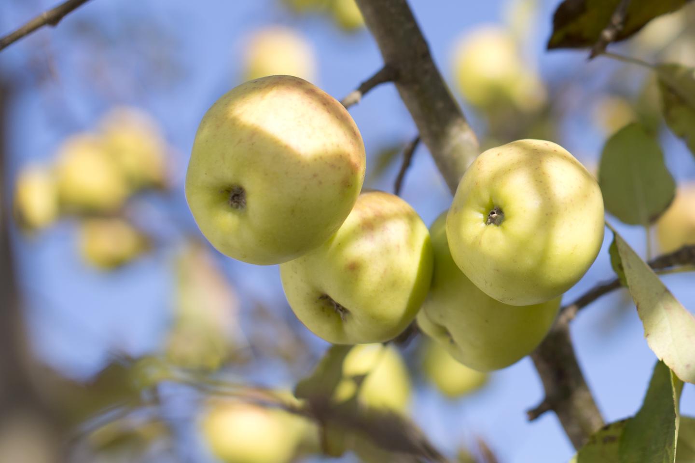 grönt äpple näringsvärde